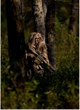 marsoc-50-cal-in-woods-usmc-photo