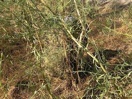 pencott-greenzone-bush-hide