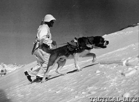 Soldier Swiss Mountain Karabiner 1931
