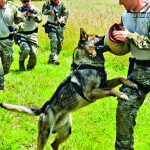 """SERT operators practice using their capable K9, """"Ex,"""" to apprehend a suspect, played by a fellow team member."""