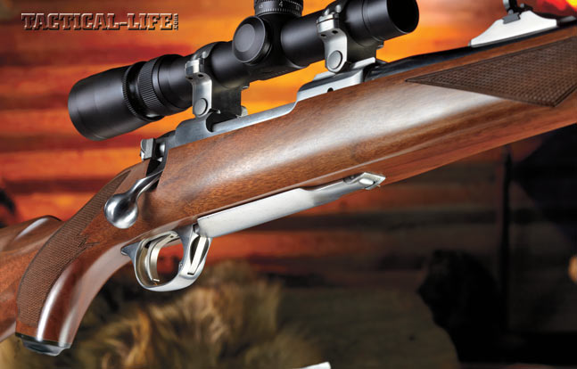 The American walnut stock and brushed stainless steel on the Ruger M77 International are pleasing to the eye. The stainless steel bolt knob is another bonus.