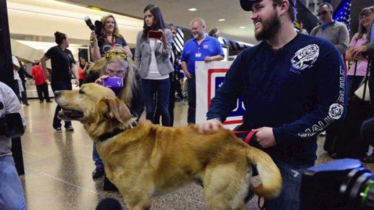 Marine canine adoption