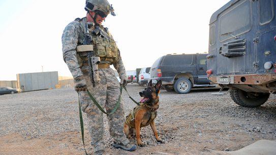 Matthew Bessler Combat K-9 PTSD