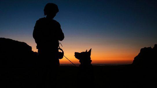 Marine Dog Teams Camp Pendleton 2015