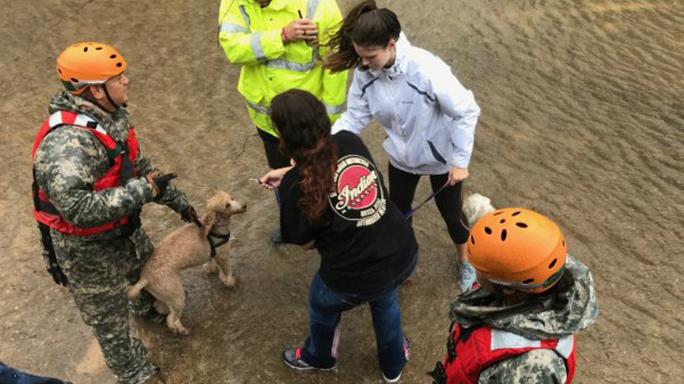 national guard hurricane harvey relief animals