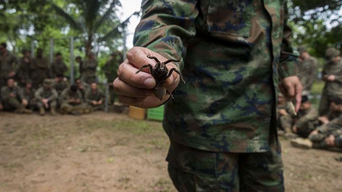 marines cobra gold tarantula