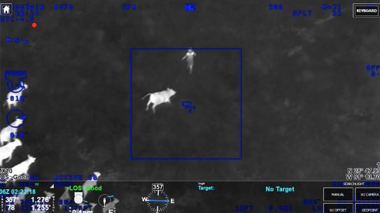 florida cow herd thief chase