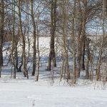 Fibrotex USA, U.S. Army,Next-Generation Ultra-Light Camouflage Netting System, snow
