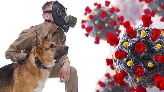 Virus-Sniffing Dogs, virus smelling dogs, disease smelling dogs, coronavirus, COVID-19