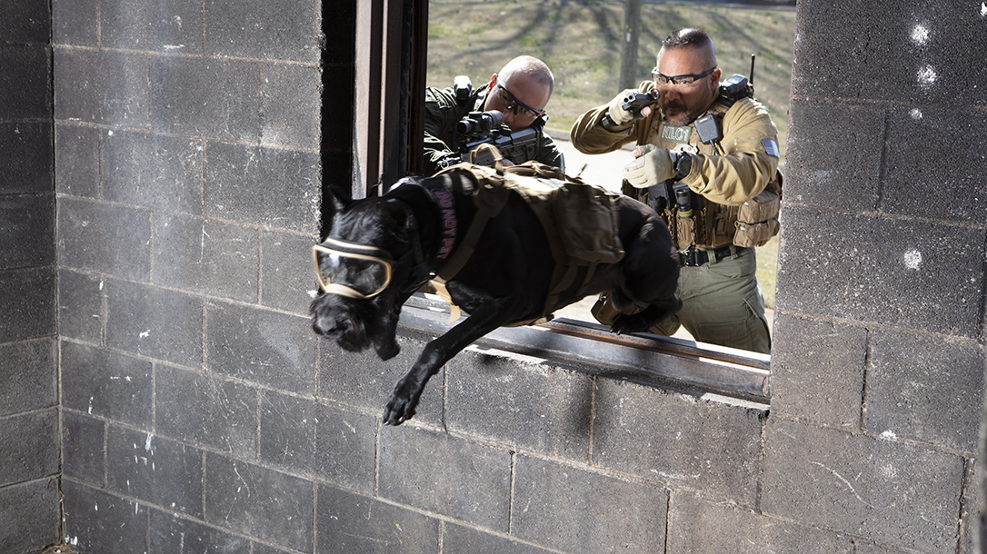 STL Garcia uses giant schnauzers to quell prison riots.